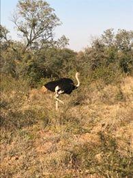 http://cgcsportworks.ca/wp-content/uploads/2018/06/Ostrich.jpg